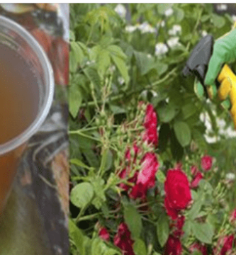 Prepara-esta-mezcla-en-casa-para-tus-Plantas